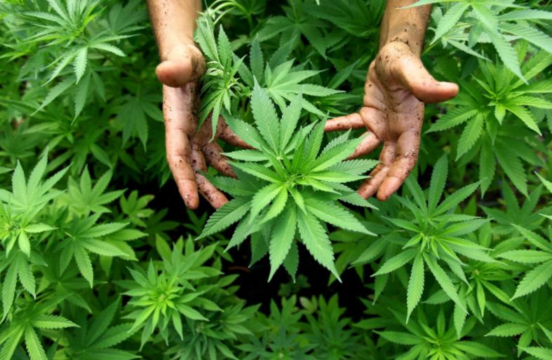 inline grow fans for indoor cannabis