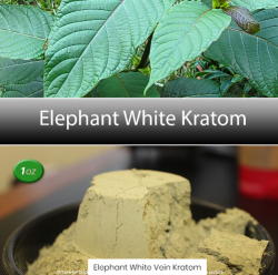 Elephant_White_Vien_Kratom- best kratom for sale