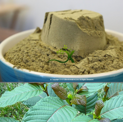 Green Maeng Da Kratom-best kratom for sale